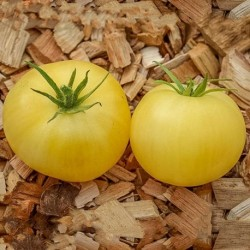 TOMATE ETOILE BLANCHE D'ANVERS GRAINES